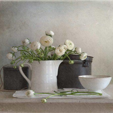 Tineke Stoffels Ranunculus
