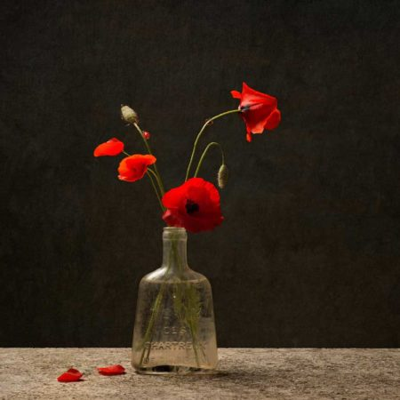 Tineke Stoffels Coquelicot