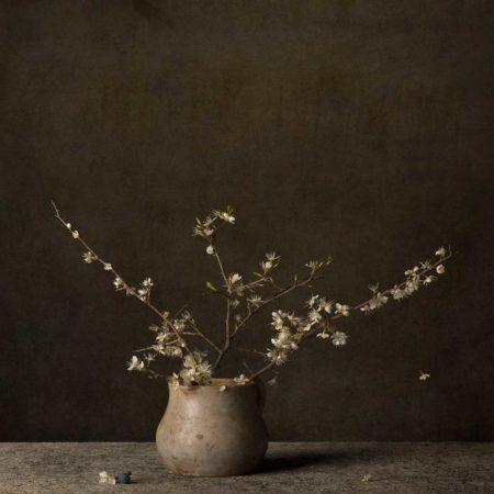 Tineke Stoffels Prunellier